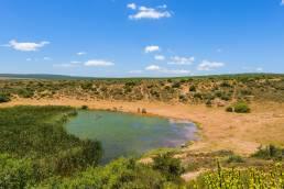 Elefanten am Wasserloch im Addo Elephant Nationalpark Südafrika