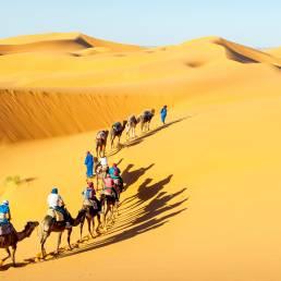 Kamel-Reiten in der Wüste in Indien