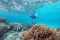Ein Taucher in einem Riff mit Fischen vor Rarotonga, Cookinseln.