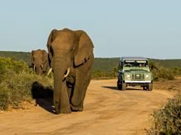 Zwei Elefanten und ein Geländewagen im Addo Elephant Nationalpark, Südafrika