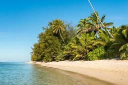 Ein Strandabschnitt mit Palmen auf den Cookinseln in Ozeanien