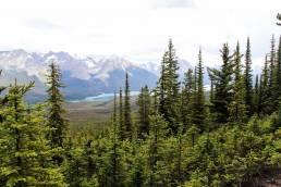 Die Wälder des Yukon in Kanada von oben