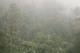 Thailand zur Green Saison oder Nebensaison mit tief hängenden Nebenlschwaden in den Wäldern