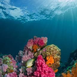 Die natürliche Unterwasserwelt in Koh Tao in Thailand soll sorgfältig behandelt werden damit die Farbenbracht erhalten bleibt