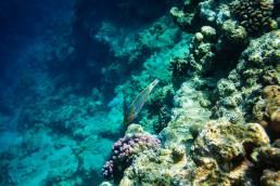 Die bunte Unterwasserwelt in Koh Tao in Thailand ist ein Paradies für Taucher