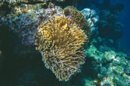 Lokale Umweltinitiativen werden in Thailand ergriffen um die Schönheit der Korallen zu schützen