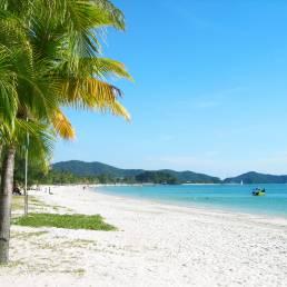 Grüne Palmen umsäumen den weißen Sandstrand und das türkisblaue Meer